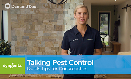 Aimee's quick tips for cockroach control