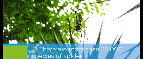 Aimee Spider Facts