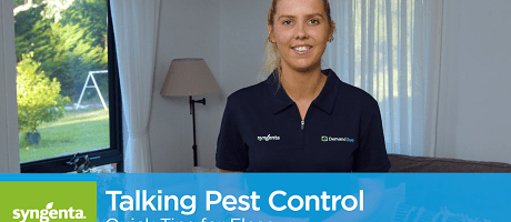Talking Pest Control: Quick Tips for Flea Control