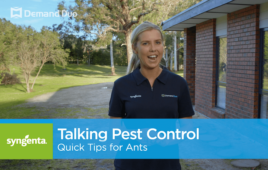 Aimee's Quick Tips for Ant Control