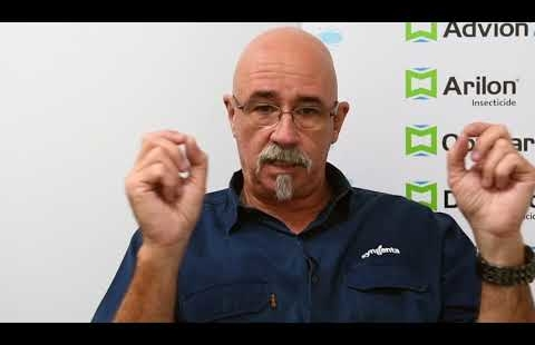 Pest Talk: Technical Tips - Why species identification is important
